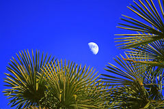 The moon and palm trees in the sky Royalty Free Stock Photography