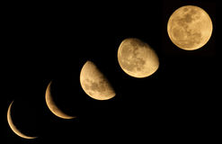 The Moon Phase. Five phase of the yellow moon Royalty Free Stock Image