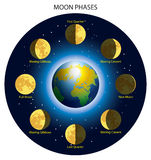 Moon phases. Basic phases of the moon Stock Photos