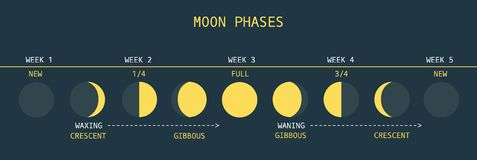 Moon Phases. Vector Illustration of Informative Chart of Monthly Moon Cycle Stock Photo