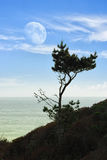 Moon and pine Royalty Free Stock Photography