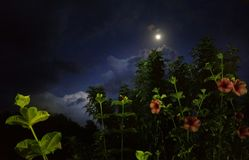 Moon rays showering on flowers royalty free stock photo