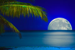 Free Moon Reflected On The Water Of A Tropical Beach Stock Image - 25079581