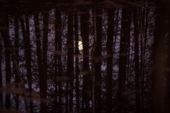 The moon is reflected in the water through the trunks and branches of trees. stock photography