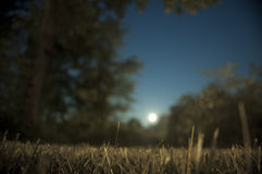 Moon Rise Stock Photography