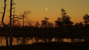 Moon rise over forest lake and orange sky after sunset Royalty Free Stock Image