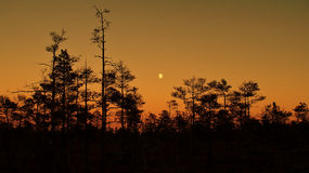 Moon rise after sunset and orange sky over forest Stock Photos