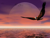 Moon Rise With Eagle. Royalty Free Stock Images
