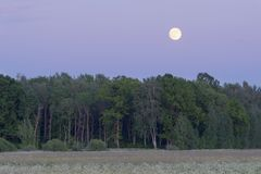 Moon rises over forest Royalty Free Stock Photos
