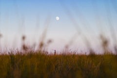 Moon rising. A view through grass in the foreground of a distant moon rising in a blue, cloudless sky over a country field royalty free stock image