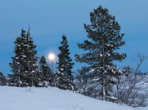 Moon rising behind some spruce trees in winter landscape with snow, in Setesdal, Norway. Moon rising behind some spruce trees in winter landscape with snow Stock Image