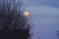 The moon is rising early. The moon is rising behind a large tree shortly before darkness is setting in royalty free stock photography