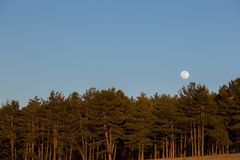 Moon rising up behind some trees in a forest, with warm sunset c Stock Photos