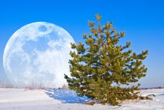 Moon rising in a winter plain Royalty Free Stock Photos