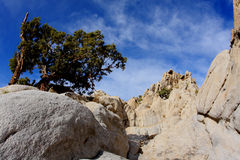 Moon Rocks Nevada. A tree grows in the rocks in an area known as Moon Rock in Nevada Stock Image