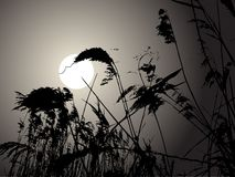 Moon in the rushes Stock Photos