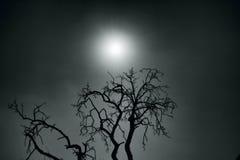 Moon. Scary tree and moon, boo stock image