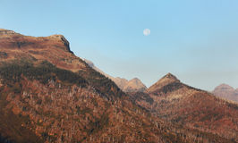 Moon Setting in Glacier National Park. The moon sets over a previously burned area of Glacier National Park Royalty Free Stock Photos