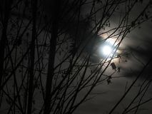 Moon shines through branches Stock Image