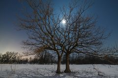 The moon shines through the branches of a tree. Against the background of the night starry sky in winter Royalty Free Stock Photography