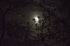 The moon shines through the branches of the trees at night. The moon shines through the branches of the trees at dark spring night, silhouette of a tree against Royalty Free Stock Image