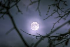 A moon shining in the middle of a dark night. stock photos