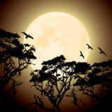 Moon and silhouettes of tree branches Stock Image
