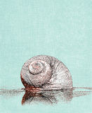 Moon Snail Illustration Stock Images