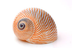 Moon snail isolated on white Stock Photography
