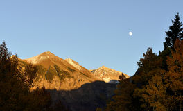 Moon, snow covered mountains and yellow aspen at sunset Royalty Free Stock Images
