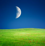 Moon and spring meadow Stock Photo