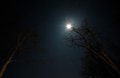 The moon and the stars through the branches Royalty Free Stock Photography