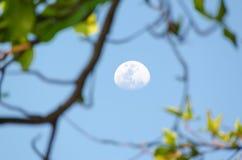 Moon su un cielo del giorno con i rami di albero nella priorità alta Fotografia Stock Libera da Diritti