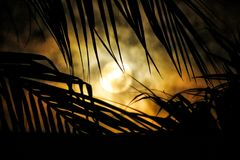 Moon and palm trees Royalty Free Stock Photography