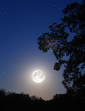 Moon and tree. Night moon and tree silhouette Royalty Free Stock Image
