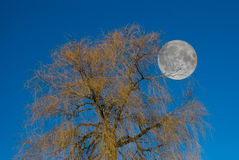 Moon Tree Stock Image
