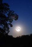 Moon and tree. Night moon and tree silhouette Royalty Free Stock Images