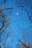 Moon among of tree Stock Photos