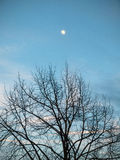 Moon with tree in autumn Royalty Free Stock Images