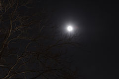 Moon and tree Royalty Free Stock Photos