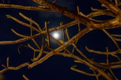 Moon and tree branches stock photo