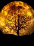 Moon, Tree, Kahl, Silhouette Stock Photo