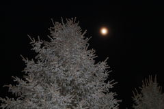 Moon tree Royalty Free Stock Photos