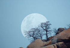 Moon and trees Stock Photography