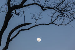 Moon Trees Royalty Free Stock Photo