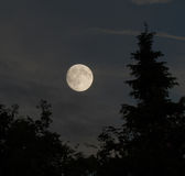 Moon in trees. Full moon with trees in the foreground, thin clouds lit from below, behind trees Stock Photography