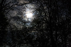 Moon Through the Trees. Night shot of the moon, through trees, on a cloudy evening Stock Images