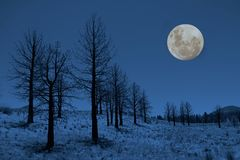 Moon and Trees in the Sierras Stock Photo