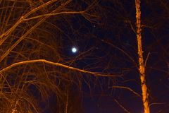 The moon and the trees winter Stock Photography