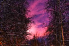 The moon and the trees winter Royalty Free Stock Photography